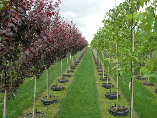 Trees Nursery Plants Local Directory
