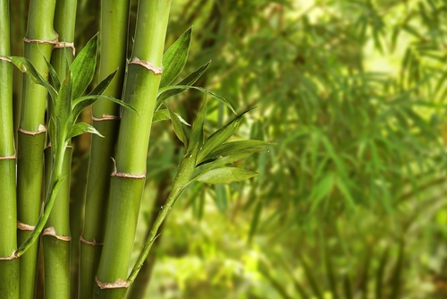 Bamboo Plant Nursery Pinellas County Fl